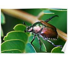 Japanese Beetle Poster