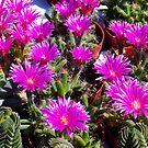 1519-pretty cactus by elvira1