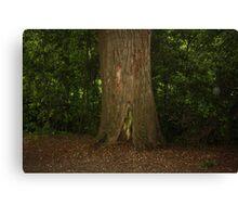closeup of a tree trunk Canvas Print