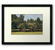 Walking Through the Grass Framed Print