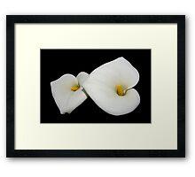 beautiful calla lilies on black Framed Print