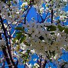 1537-flowers tree by elvira1