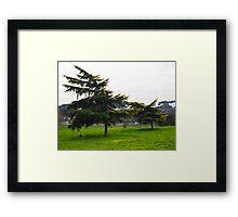 trees downwind Framed Print