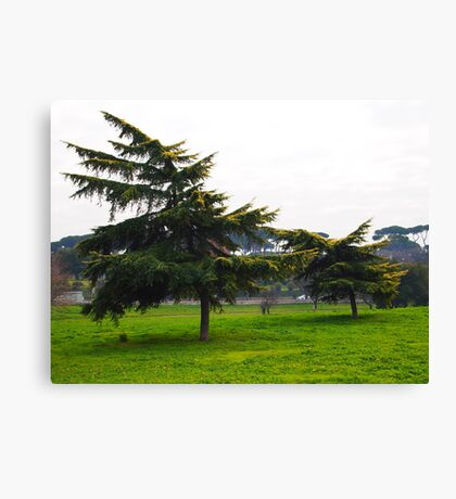 trees downwind Canvas Print