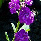 1545-purple flower by elvira1