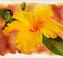 Hibiscus - Mango Sunshine by MotherNature2
