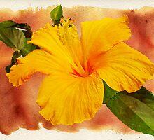 Hibiscus - Mango Sunshine by MotherNature2