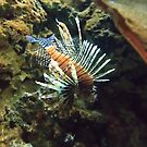 Lion Fish by Debbie Cato