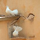 White pigeons by julie08