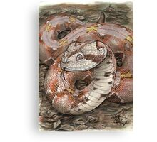 Smiling Viper Canvas Print