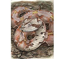 Smiling Viper Photographic Print