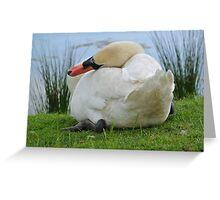 Flirting swan  Greeting Card
