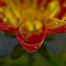 Wet Flower Petal by HanieBCreations