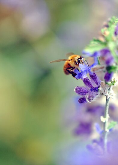 Busy Buzzy Bumble by MarjorieB