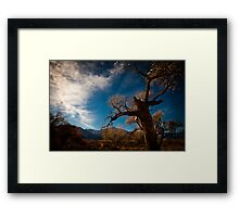 : Tree and the Sky in Lone Pine : Framed Print