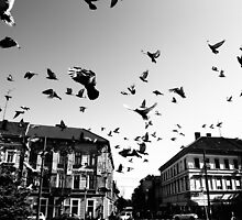 stop the pigeon! by Sergiu Roll