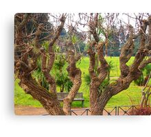 Couple of trees Canvas Print