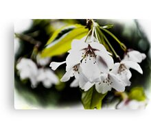 Springtime Blooms Explode Canvas Print