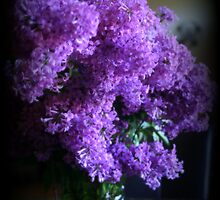 Lilac Bouquet by kkphoto1