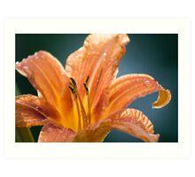 Summer lily after a summer storm Art Print