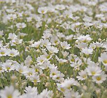 Summer Herbs by Bree Waltman