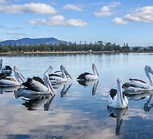 Pelicans at Wagonga Inlet by TonySlattery