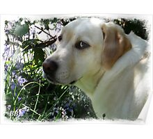 ~ Just Smelling the Bluebells Mum ~ Poster