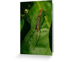 Hopper on a Leaf Greeting Card