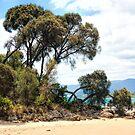 Hawley Beach.... Tasmania by SharonJH