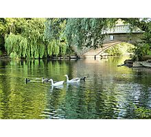 Stanley Park Boating Lake. Photographic Print