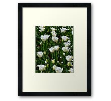A field of frilly tulips in colour Framed Print