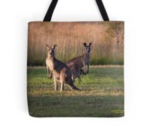 Kangaroos with Joey Late Afternoon at Vacy, NSW Australia Tote Bag