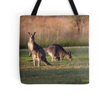 Kangaroos and baby Joey grazing at Vacy, NSW Australia Tote Bag