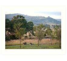 Kangaroos and their Joey -Vacy, NSW Australia Art Print