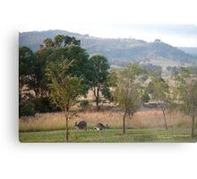 Kangaroos and their Joey -Vacy, NSW Australia Metal Print