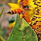 The Pollen Spreader by Ikramul Fasih