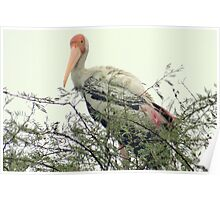 The Painted Stork Poster