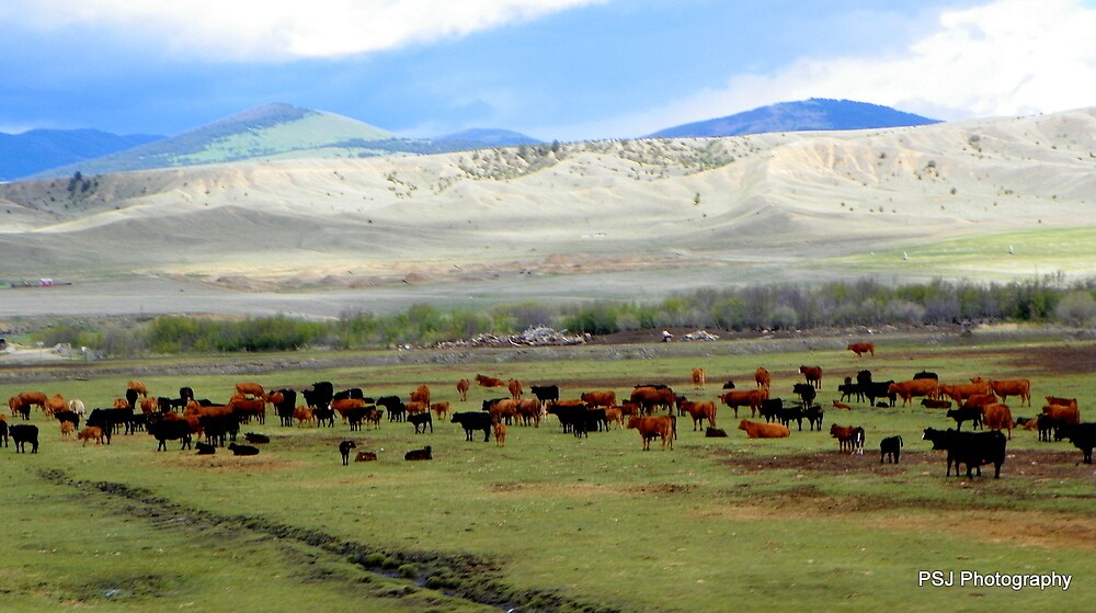 Cows in Montana by Sammiepue