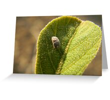 The small world! Greeting Card