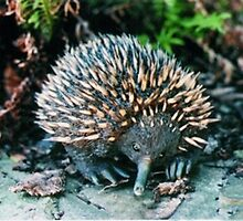 Echidna Sculpture In My Garden by arlenedelahenty