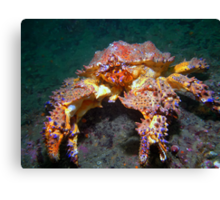 Puget Sound King Crab  Canvas Print