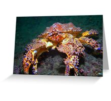 Puget Sound King Crab  Greeting Card