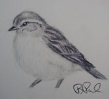 Little Bird, Little Bird by Barb Paul