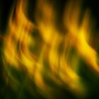 Springtime flames by Patrick Morand