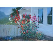 Hollyhock Corner Photographic Print