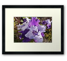 Lavender's Blue, Dilly Dilly Framed Print