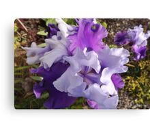 Lavender's Blue, Dilly Dilly Canvas Print