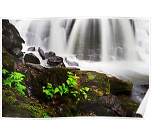Ferns at the Base of the Falls  Poster