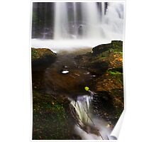 White Water Leaf  Poster