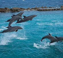 Leaping Dolphins by Ralph Goldsmith
